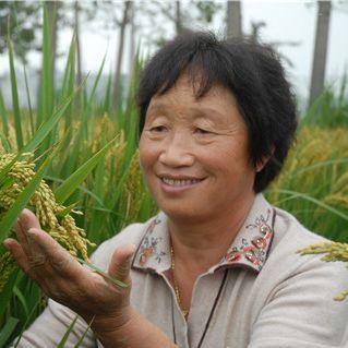 王桂凤:稻田里走出来的农民育种专家