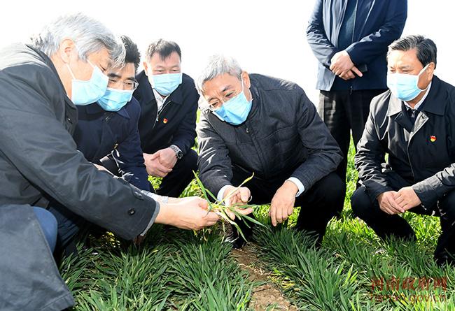 尹弘到商丘开封调研疫情防控和农业生产
